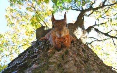 De eekhoorn: Welke 4 lessen kun jij leren?